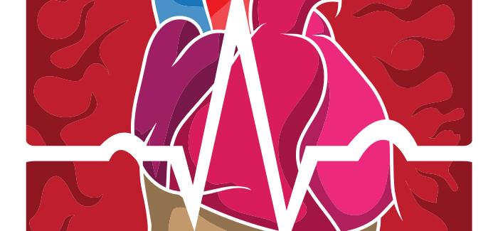 Je hart en longen werken samen
