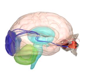 Slecht zien door fout in brein vraagt expertise