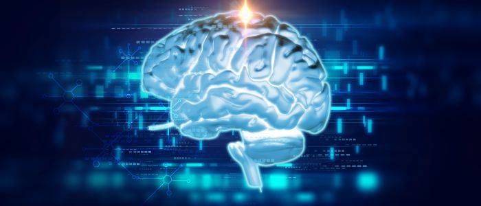 Nierschade tast – behalve het hart – ook het brein aan
