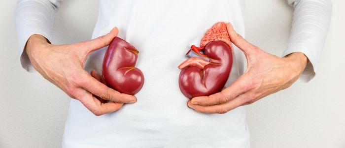 Eiwit in transportvloeistof voorspelt kwaliteit donornier