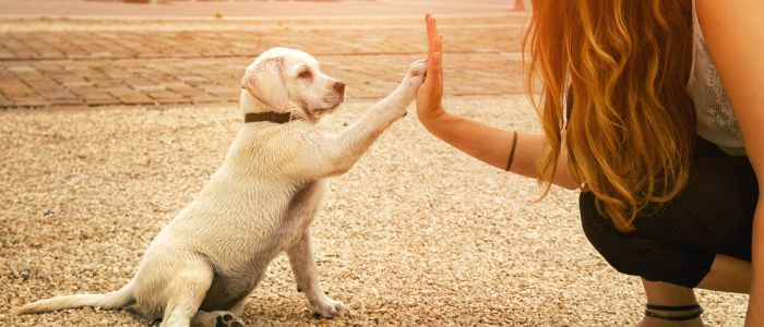 Mensen herkennen emoties in diergeluiden