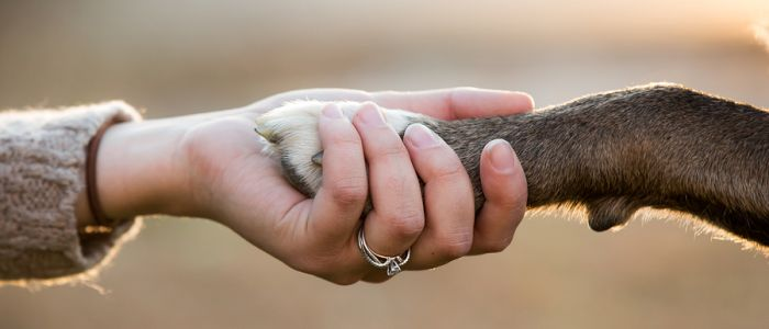 Vanwaar de sterke band tussen mens en hond?