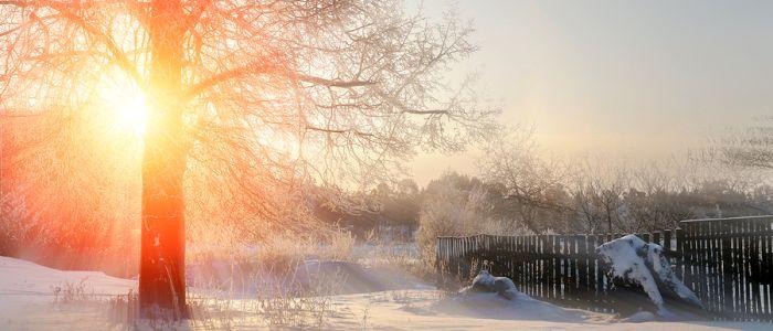 Winterkilo's te wijten aan onvoldoende zonlicht