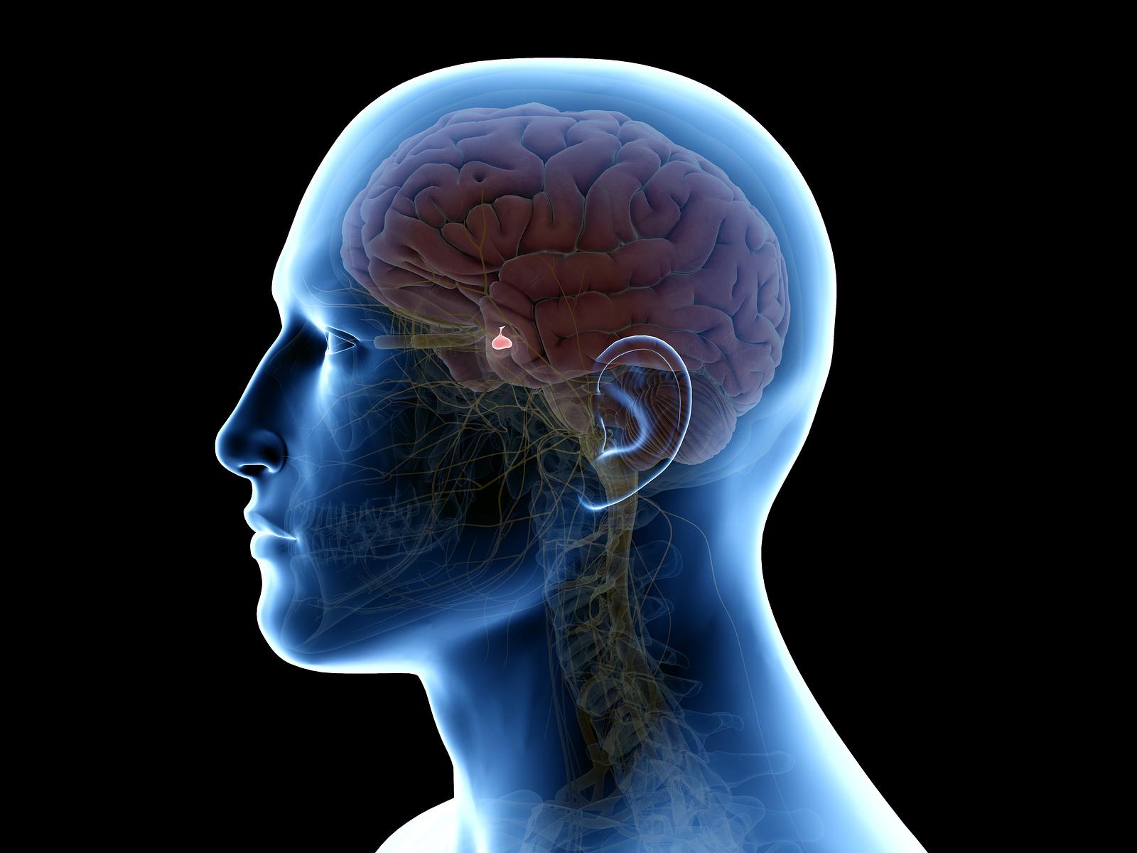 Problemen met de hypofyse zijn problemen voor het hele lichaam